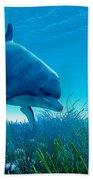Dolphin Pod Beach Towel