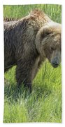 Don't Mess With Mama Bear Beach Towel by Belinda Greb
