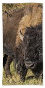 Don't Mess With This Bison Beach Towel