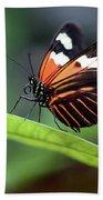 Doris Longwing Butterfly 2017 Beach Sheet