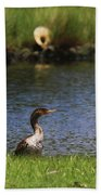 Double-crested Cormorant 3 Beach Towel