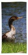 Double-crested Cormorant 5 Beach Towel