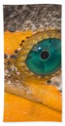Double-crested Cormorant's Emerald Eye Beach Towel