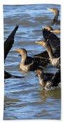Double Crested Cormorants Beach Towel