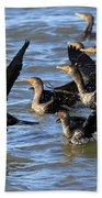 Double Crested Cormorants Beach Sheet