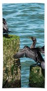 Double-crested Cormorants Beach Sheet