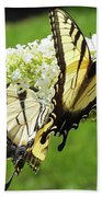 Double The Pleasure - Eastern Tiger Swallowtails Beach Towel