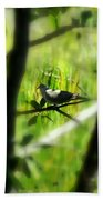 Dove In The Everglades  Beach Towel