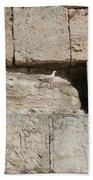 Dove On The Kotel Beach Towel
