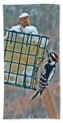Downy Woodpecker In The Snow Beach Towel
