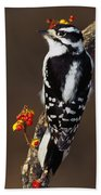 Downy Woodpecker On Tree Branch Beach Towel