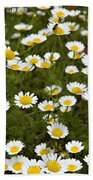 Dozens Of Daisies Beach Towel