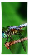 Dragonfly 11 Beach Towel