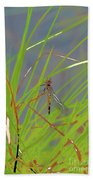 Dragonfly 4 Beach Towel