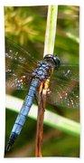 Dragonfly 6 Beach Sheet