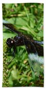 Dragonfly Close Up Beach Towel