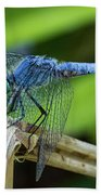 Dragonfly Color Beach Towel