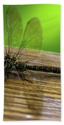 Dragonfly Colors Beach Towel
