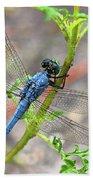 Dragonfly Delight Beach Towel