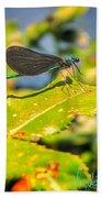 Dragonfly Dragonfly  Beach Towel