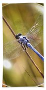 Dragonfly In A Bubble Beach Towel