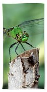 Dragonfly In The Flower Garden Beach Towel