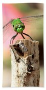 Dragonfly In The Petunias Beach Towel