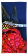 Dragonfly On A Pitcher Plant 009 Beach Towel