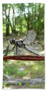 Dragonfly On Barbed Wire Beach Towel