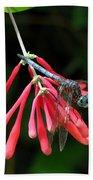 Dragonfly On Honeysuckle Beach Sheet