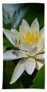Dragonfly On Waterlily  Beach Towel