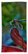 Dragonfly Resting Beach Towel