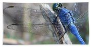 Dragonfly Wing Detail Beach Towel