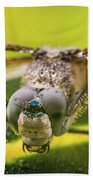 Dragonfly Wiping Its Eyes Beach Sheet
