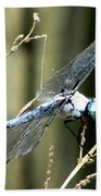Dragonfly With Yellowjacket 1 Beach Towel