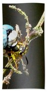 Dragonfly With Yellowjacket 2 Beach Towel