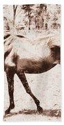Drawn Ranch Horse Beach Towel