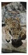 Drinking Jaguar Beach Towel