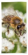 Drinking Up The Nectar, Apis Mellifera Beach Towel
