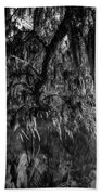 Drippin With Spanish Moss At Middleton Place Beach Towel
