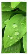 Drops On Leaves Beach Towel by Carlos Caetano