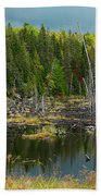 Drowned Trees Beach Towel