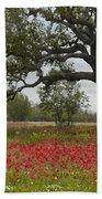 Drummonds Phlox Meadow Near Leming Texas Beach Sheet