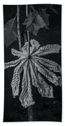 Dry Leaf Collection Bnw 2 Beach Towel