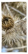 Dry Thistle Buds Beach Towel