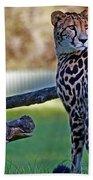 Dubbo Zoo Queen - King Cheetah And Cub Beach Towel