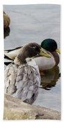 Duck, Duck Beach Towel