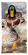 Duck - Id 16235-220255-9105 Beach Towel