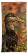 Duck In Autumn Beach Towel