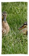 Duck Meeting At Frankenmuth Beach Towel